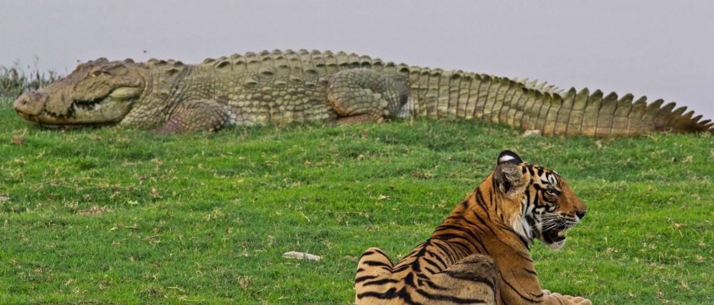 Los Bardia National Park Tour 3 Days