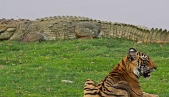 Bardia National Park Tour 3 Days